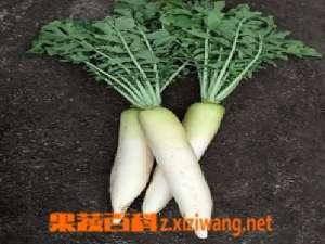 白萝卜贮存和营养成份
